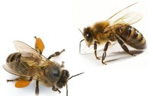 Чешется нос вследствие укуса насекомого